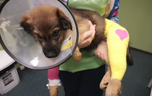 Koer toetab ravi