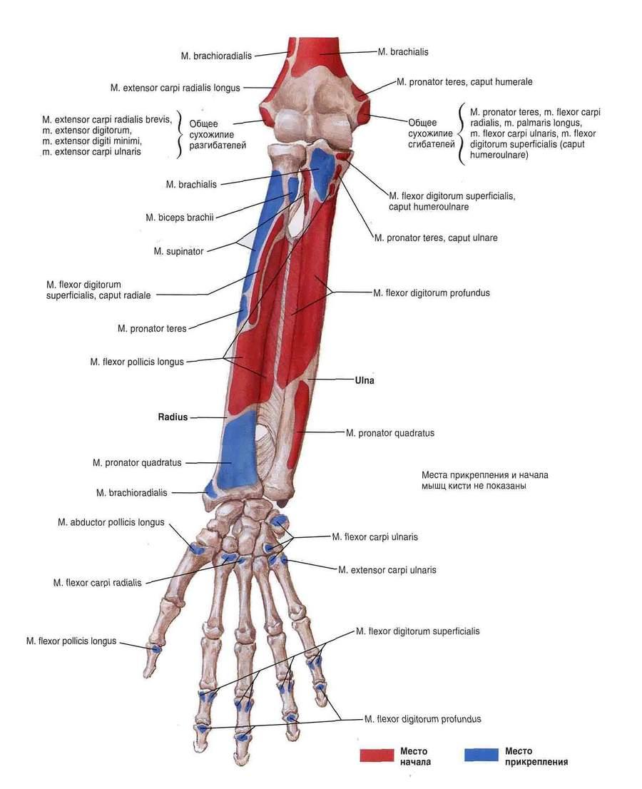 Kaed harjade poidla liigese Artroosi Forep Hand ravi