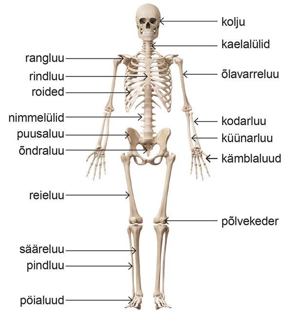 Artriidi artroosi liigesed harjavad kaed Pildi liigeste poletik