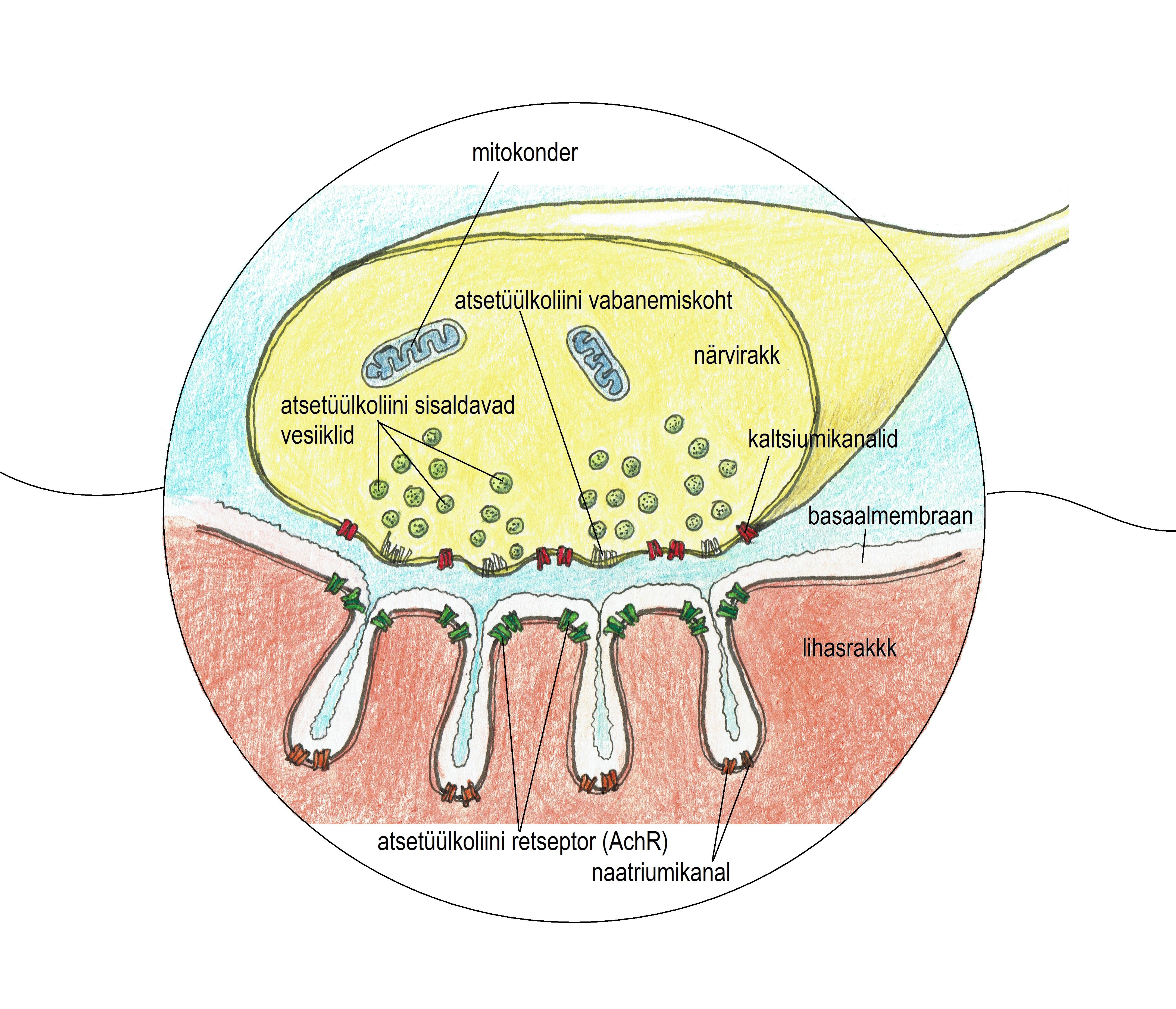 Artriit 5 sormede harja