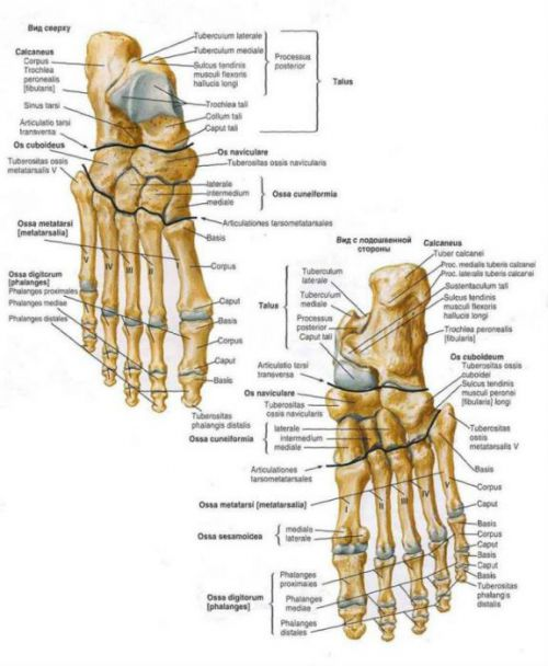 Valu alumises seljaosas sormede liigestes