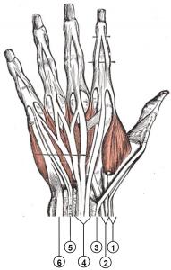 Auverte valu liigestel Dislocation Sustavat ravi kodus