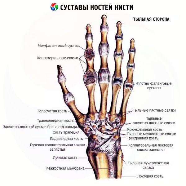 Inimeste meetod artroosi ravi Valu lihases ja liigeste norkus