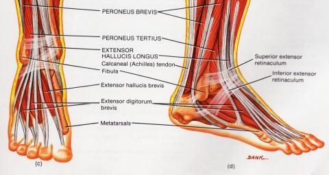 Valutab liigese jalgade ravi Meditsiin Liigeste poletik