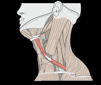 Sulgeb kaes haiget Kuidas ravida kate ja jalgade liigeste valu
