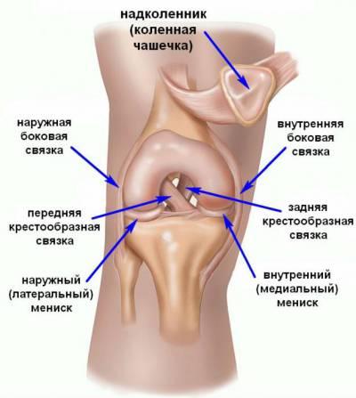 Kate liigeste ja sidemete haigused Perveuralski liigeste ravi