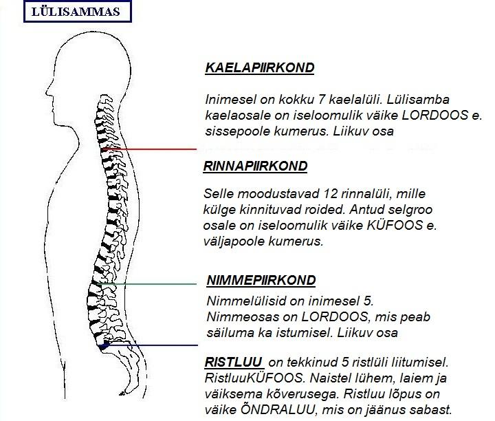 Selgroo valu Neuropaatiavalu liigestes