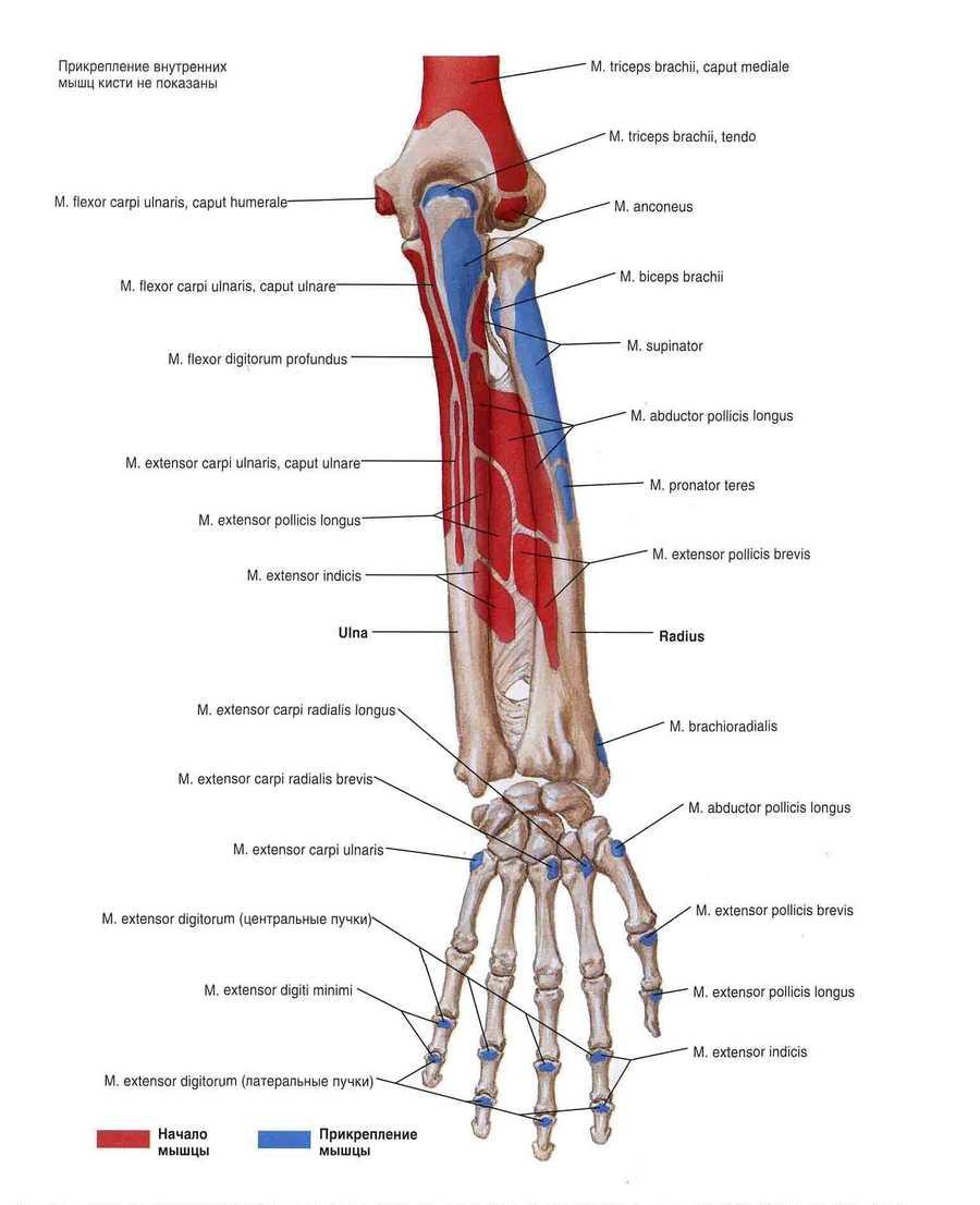 Kaed harjade poidla liigese Valu liigeste kaed