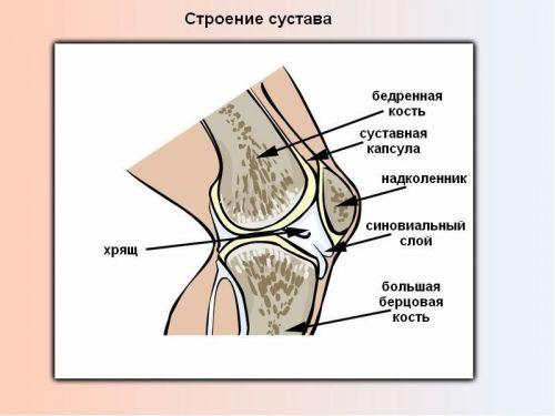 Liigeste artroos taiskasvanutel Valutab parempoolse tippu