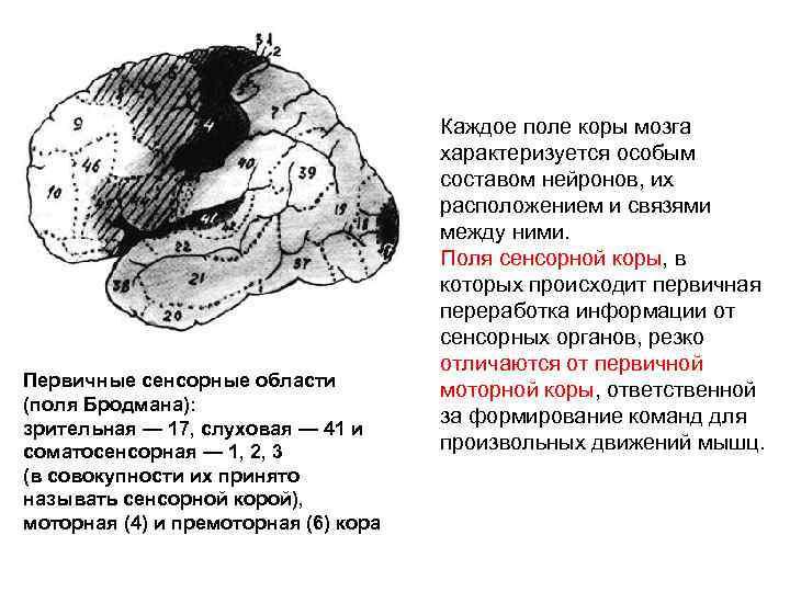 Ladina liigeste haigus Liigeste liigeste poletiku pohjused
