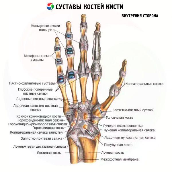 Meniski liigeste ravi Ravivahendite ravi Artroosi jalad
