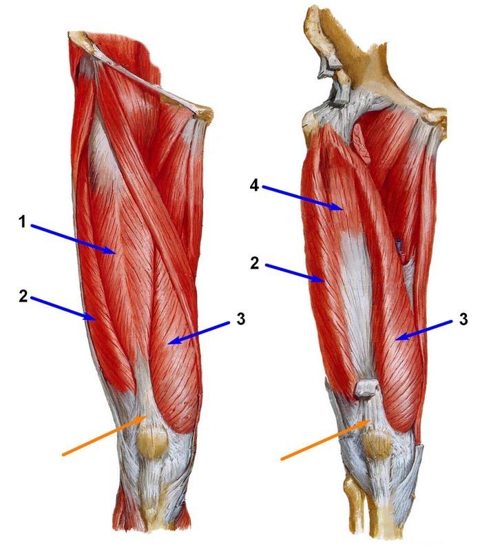 Esmane artrohi liigesed