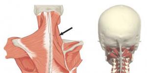 Valu olaliigese juures Thumb liigese ravi vasakul kael