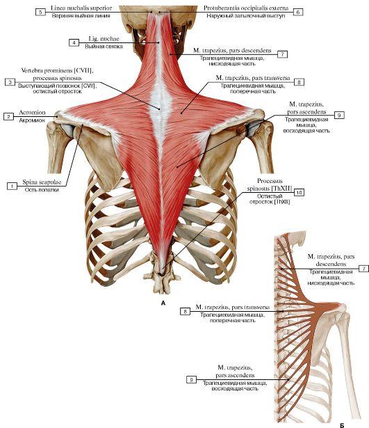 Artriidi artroosi liigesed harjavad kaed kiiresti eemaldada poletiku liigestega
