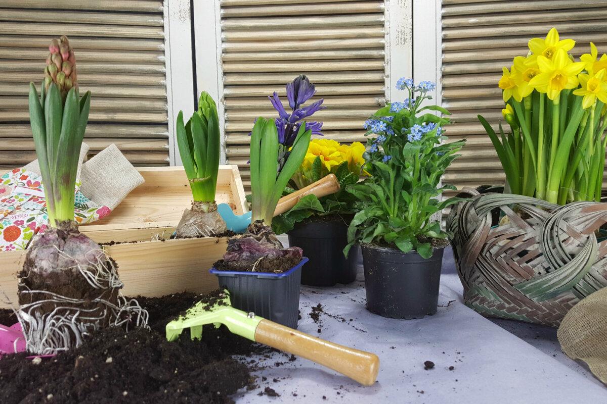 Millised taimed aitavad uhisvalu Mul on probleeme liigestega, mida teha